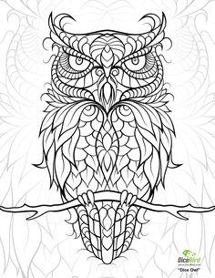 """iColor """"Owls"""" (1582×2048)"""