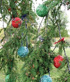 Bird Seed Holiday Balls - Love this!  Decorate outside and feed birds at the same time.