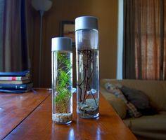 Em garrafas limpas e, de preferência, com tampa, coloque pedras para fundo de aquário. Acrescente algumas plantinhas (podem ser naturais ou plásticas) e depois encha de água. Só não vale colocar um peixe, pois, além do espaço ser pequeno, não há sistema para filtrar a água.   http://mdemulher.abril.com.br/familia/claudia/9-ideias-para-reutilizar-garrafas-de-vidro-na-decoracao