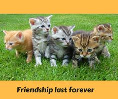 Look at these cute kittens. Kittens, puppies and babies who does not find them so cute. Share and tag with a friend you know just loves them! Cute Kittens, Cats And Kittens, Kittens Meowing, Beautiful Kittens, Animals Beautiful, Crazy Cat Lady, Crazy Cats, Film Meme, Baby Animals