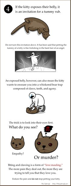 How To Pet a Kitty - everything you need to know!