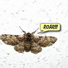 The moth at my front door - Bun Karyudo Humorous Blog