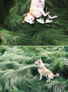 photobook : gluta (happy dog)