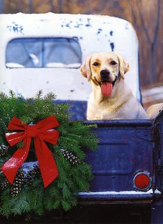 ... Brought to you in part by StoneArtUSA.com ~ affordable custom pet memorials since 2001