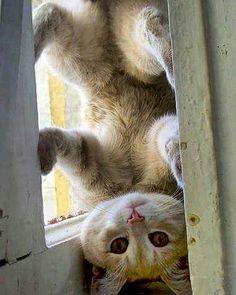 HELLO!...