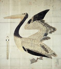 NATURAL HISTORY IN JAPAN:  Pelican Edo (江戸時代) a/k/a Tokugawa period (徳川時代) 1603 - 1868