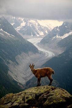 nordic deer scene