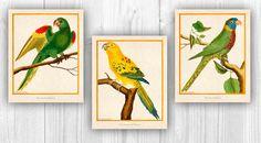 Parakeet Prints Pet bird art Vintage Parrots Nature by PrintCorner