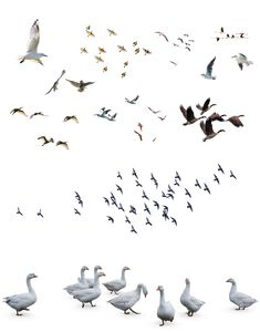 Cut Out Photoshop, Render People, Human Vector, Bird Silhouette, Entourage, Animals Images, Shops, Birds, Texture