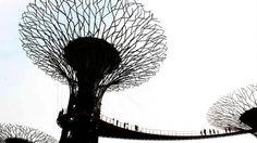 Bosque de árboles artificiales de acero, hormigón y alambre, en Marina Bay ( Singapur). Fotografía de Mukesh Dolia.