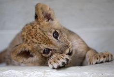 De schattigste babydiertjes