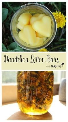How to make Dandelion Lotion Bars - a super easy recipe perfect for dry chapped hands. Lotion bars have a long history of helping the toughest cases of cracked, dry skin, while dandelion oil is partic Diy Lotion, Lotion Bars, Lotion En Barre, Herbal Remedies, Natural Remedies, Dandelion Oil, Diy Cosmetic, Savon Soap, Soaps