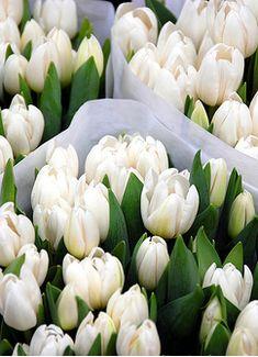 tulips..simply beautiful.