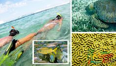 Best snorkeling beaches in Puerto Rico. Travel Guide includes photos, map, full info for snorkeling beaches around the island. Vieques, Culebra, Rincon +++