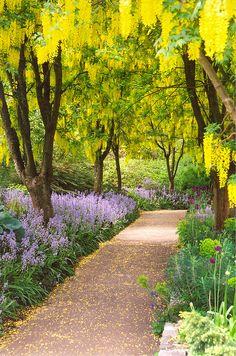 Spring, Laburnum Walk at VanDusen Botanical Garden, Vancouver, British Columbia, Canada