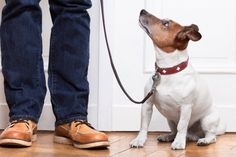 The Busy Person's Guide to Dog Training | WOOFipedia by The American Kennel Club