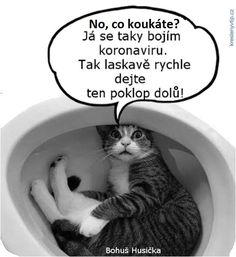 Washing Machine, Jokes, Lol, Humor, Funny, Pictures, Animals, Photos, Animales