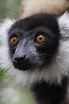 #Madagascar #africa. A trip into surprising nature. A world made of fascinating ethnic groups, wild nature and wonderful animals. An itinerary that led us to discover the Parks of Ranomafana, Andasibe, Tsingy, Isalo and Anja, the cities of Antananarivo, Antsirabe and Morondava, the Avenue of the Baobabs, up to the pristine beaches of Anakao. #travelblogger