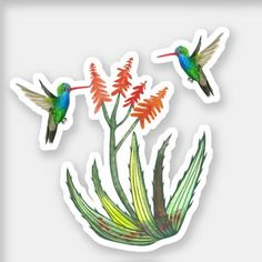 Shop Watercolor Aloe Vera Succulent Hummingbirds Blooms Sticker created by ShoshannahScribbles. Design Your Own Stickers, Custom Stickers, Your Design, White Ink, Hummingbirds, Scribble, Aloe Vera, Succulents, Bloom