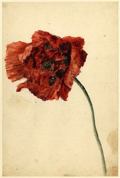 water colors by Dutch painter, Jan van Huysum- check out his work at Getty Museum--he was known as the flower painter