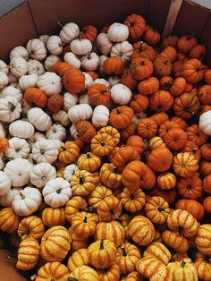Fall Pictures, Fall Photos, Halloween Season, Fall Halloween, Helloween Wallpaper, Autumn Aesthetic, Autumn Cozy, Fall Baby, Happy Fall Y'all
