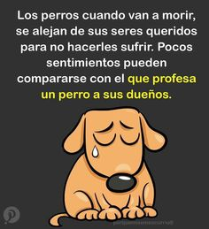 Una linda lección de amor. Hay que aprender. All Dogs, I Love Dogs, Puppy Love, Cute Dogs, Yorkie Dogs, Puppies, Ramses, Animals And Pets, Cute Animals