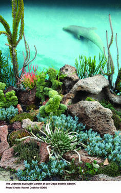 The Undersea Succulent Garden at San Diego Botanic Garden - Modern Succulent Landscaping, Tropical Landscaping, Tropical Garden, Planting Succulents, San Diego Botanic Garden, Low Maintenance Garden, Public Garden, Garden Landscape Design, Air Plants