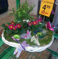 Create your own fairy garden at Stauffers of Kissel Hill Garden Center! www.skh.com