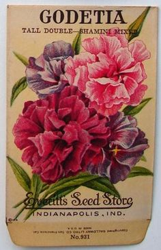 EVERITT'S SEED STORE,  Godetia 931, Vintage Seed Packet