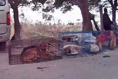 Horrible: Dogs and cats are kept in cages in order for customers to pick the animal they want, after which it is 'humanely' drowned by being shoved in a bag and thrown in a nearby river