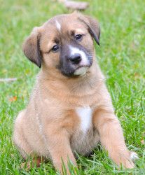 Elizabeth is an adoptable Labrador Retriever Dog in Waxhaw, NC. Meet Elizabeth, a Lab/Collie mix that was born around October 1 st . Elizabeth and her three other sisters were surrendered with their ...