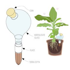 Share & Win: Beautiful Watering System For Plants