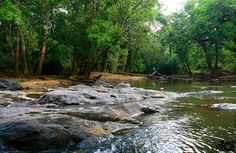 Dream Kerala welcomes you to feel the nature and enjoy ecology of beautiful Kerala with Dream Kerala Holidays