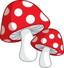 Image result for pictures of mushrooms and toadstools