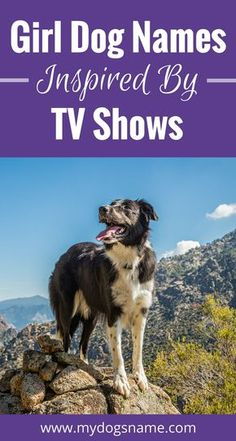 Awesome girl dog names inspired by your favorite TV shows.
