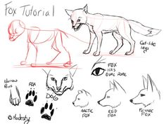 Tutorial_Foxes_by_modesty., How to draw Animals, tutorials for drawing animals, animal anatomy, animal sketches, cute, kawaii, realistic, animals , how to draw a fox, red fox, artic fox, fence fox reference , paw