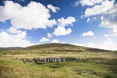 Get A Feel For The Falklands With Lindblad's Circumnavigation