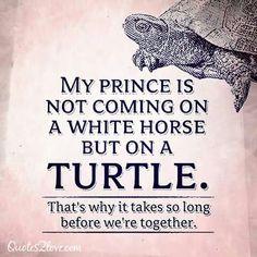 Mijn prins op het witte paard...