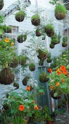 Suspended string garden. Love it! // Great Gardens , Ideas //...