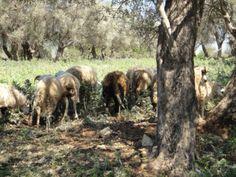 Wandelen op Kreta Griekenland griekse routes Plants, Plant, Planets