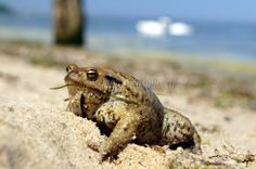 Frog on the beach :)