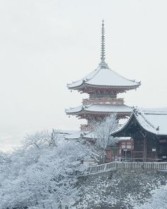 Yasaka Shrine, Kyoto, Japan | See More Pictures | #SeeMorePictures