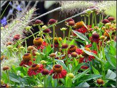 Les Jardins Botaniques de la Boirie - i don't know what this is, but I am going to find out....