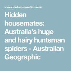 Hidden housemates: Australia's huge and hairy huntsman spiders - Australian Geographic