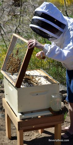 """Bees do have a smell, you know, and if they don't they should, for their feet are dusted with spices from a million flowers."" ―Ray Bradbury, Dandelion Wine #Beekeeping."