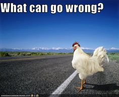 funny pets with captions | CAS-Group Blog » Blog Archive » Funny animals with captions