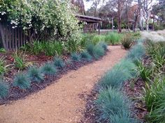 Garden Path Design Ideas - Photos of Garden Paths. Browse Photos from Australian Designers & Trade Professionals, Create an Inspiration Board to save your favourite images. Path Design, Landscape Design, Garden Design, Design Ideas, Australian Native Garden, Australian Plants, Side Garden, Garden Paths, Back Gardens