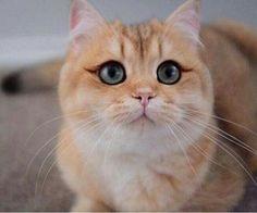 Cute Cat with Angel Eyes http://ift.tt/2h9iEnn