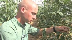 Biokertészeti módszerek: mulcs, szivárogtató öntözés, paradicsom kötözés... Button Down Shirt, Men Casual, Garden, Mens Tops, Dress Shirt, Garten, Lawn And Garden, Gardens, Gardening