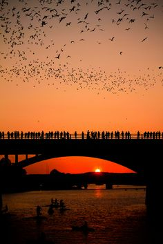 Bats over an Austin, TX bridge ~ Each night, more than 100 million free-tailed bats disperse from caves and bridges in south-central Texas to forage for food. They ingest enormous quantities of insects and save American farmers between $3.7 billion and $54 billion a year. Thank a bat for your low cost and pesticide free produce.